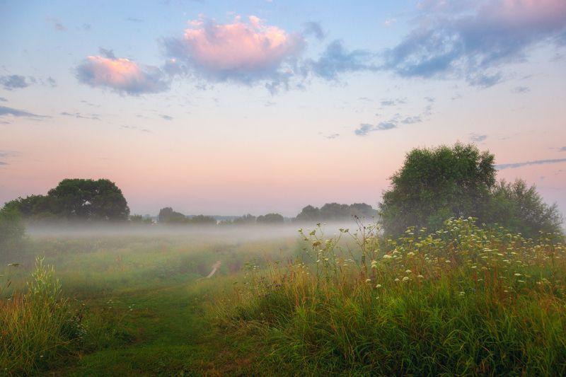 лето, туман, утро, подмосковье Утренний этюдphoto preview