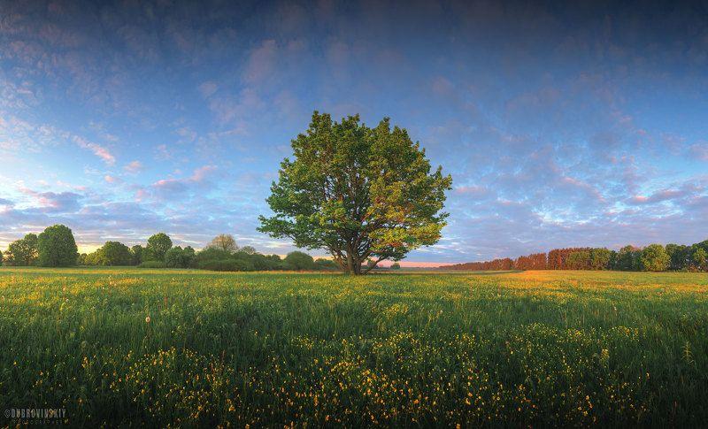 дерево, весна, рассвет Весенняя акварельphoto preview
