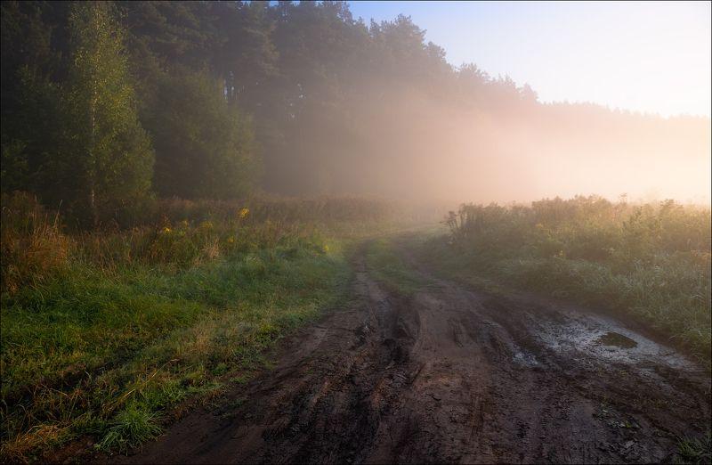 рассвет, лес, туман, После ночного дождяphoto preview