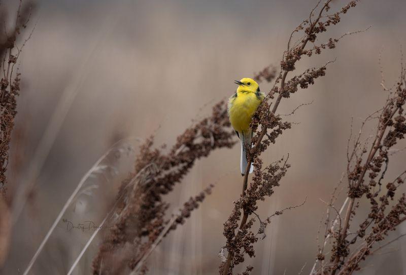 природа, лес, поля, огороды, животные, птицы, макро В пасмурный деньphoto preview