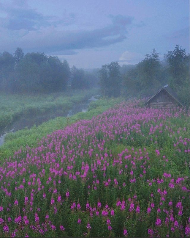 иванчай, цветы, деревня Кипрейphoto preview