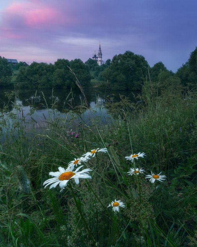Валищево, Московская область, ромашки, природа, пейзаж Вечер в д. Валищевоphoto preview