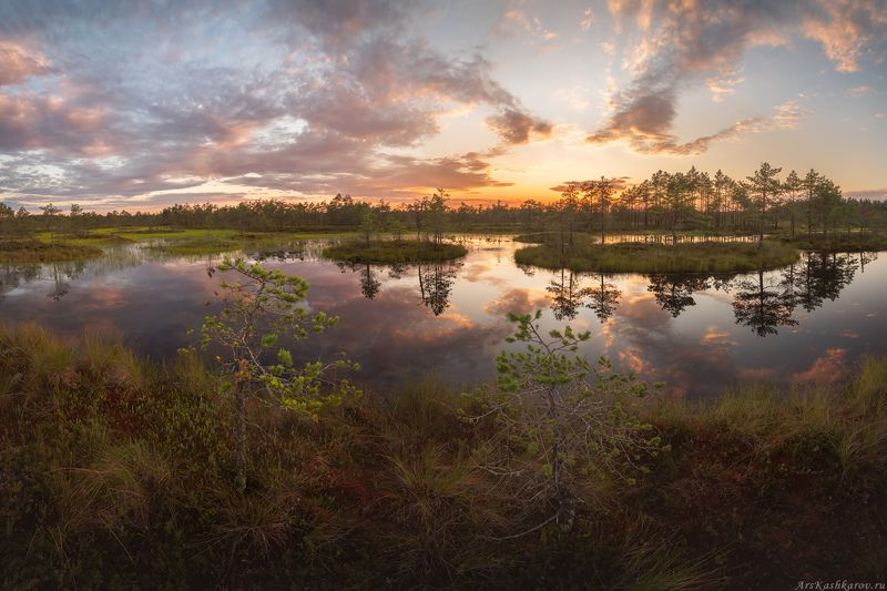 болото, ленобласть, фототур, сосны, ленинградская область, вечер, после заката, болотные топи \