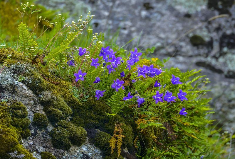 А в горах цветы необычайной красоты!photo preview