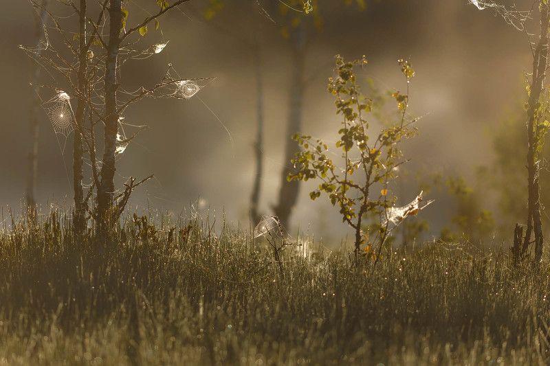луга, лужскийрайон, рассвет, туман Июльское утроphoto preview