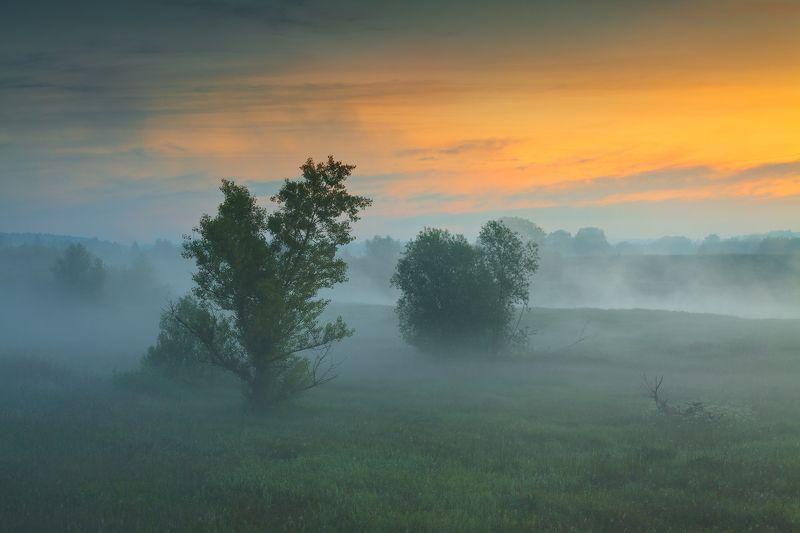 польша, туман, утро, mist, fog, poland, lesser poland, tree, golden hour, tranquility, outdoor, meadow, grass, plain, clouds, sunrise, silene, atmosphere, mood, nature, willow, ***photo preview