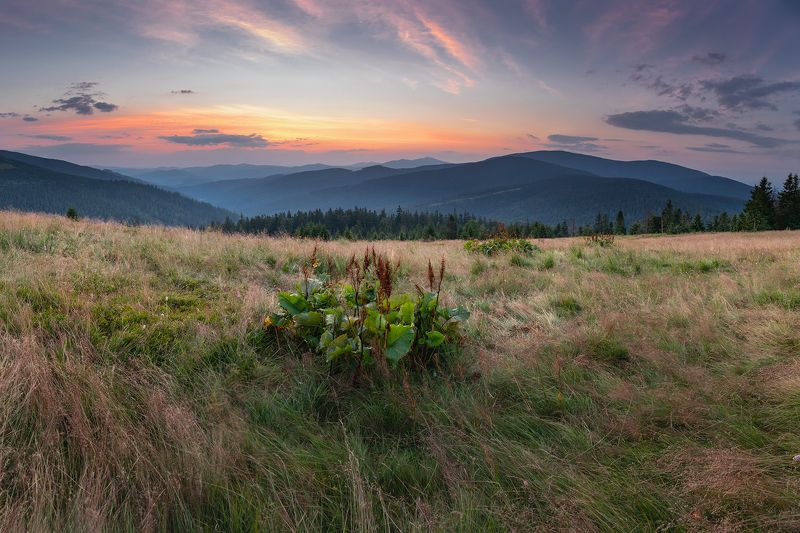 mountains, summer, poland, slovakia, sunrise Summer in the Mountainsphoto preview