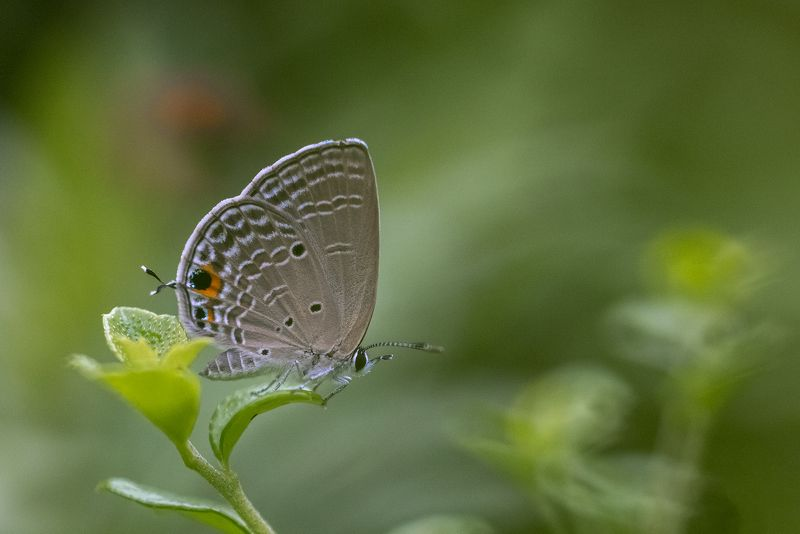 #butterfly photo preview