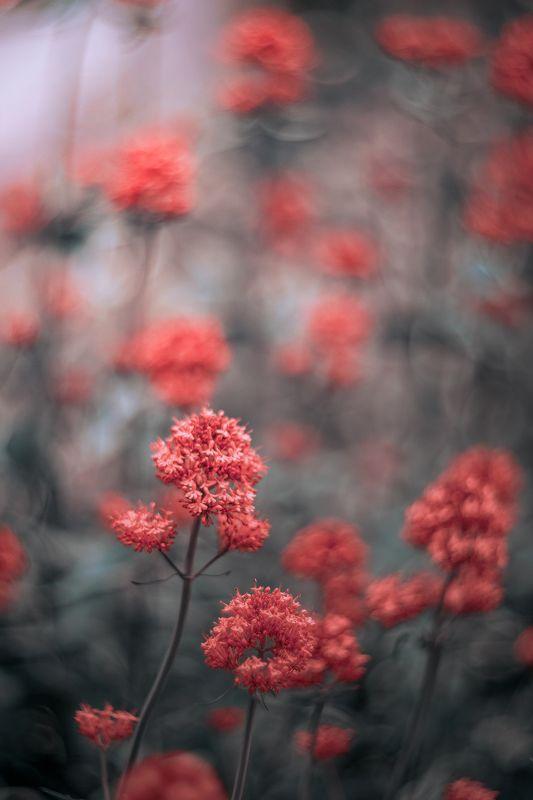 Light,bokeh,nature,pink,zenit,helios,85mm,flowers, Pinkphoto preview