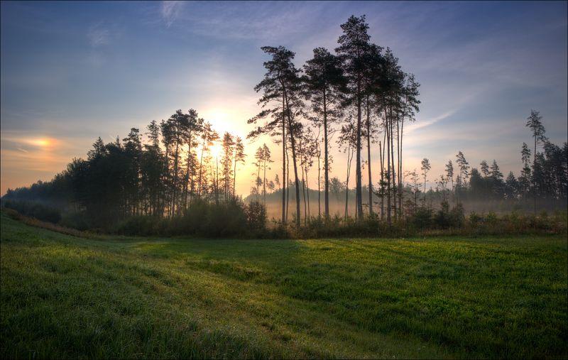 лето, лес, утро, туман, Утренний туман в лесуphoto preview