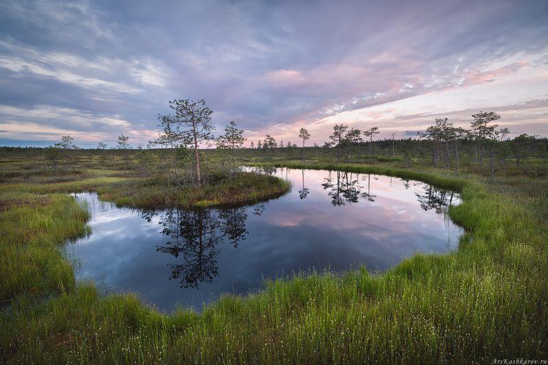 болото, ленобласть, фототур, ленинградская область, болотные топи, сосны \