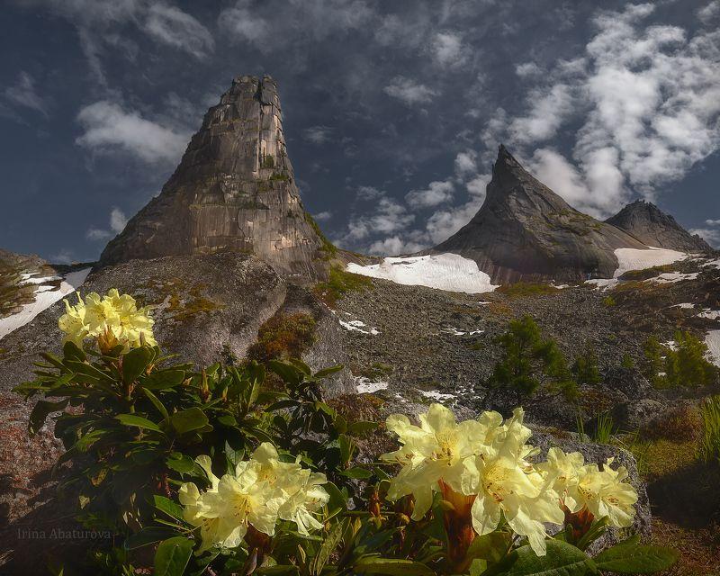 ергаки, природный парк, парабола, цветы Время цвестиphoto preview