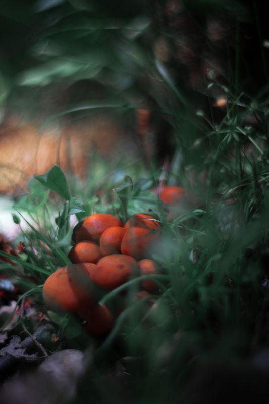 Mushrooms,nature,green,grass,light,dark,zenit,helios,85mm Orange and greenphoto preview