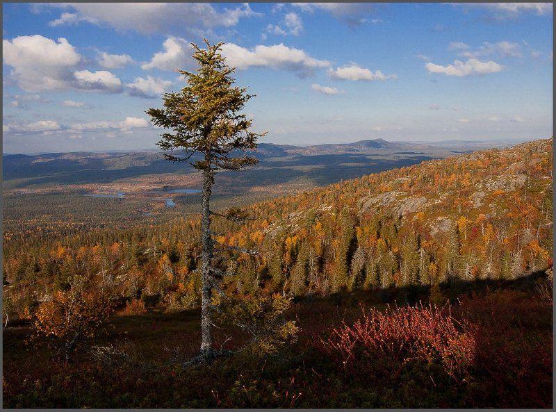 Карелия осень.Ландшафты Паанаярви.photo preview