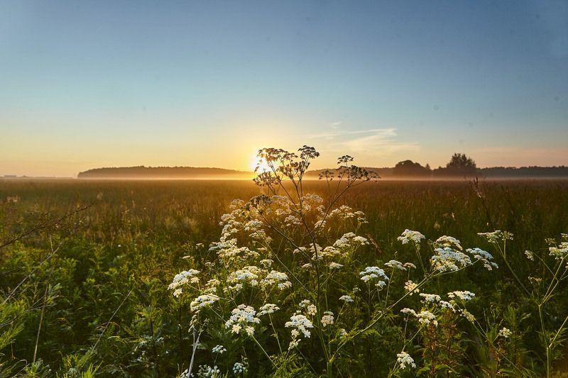 Подмосковное утро…Домодедовоphoto preview