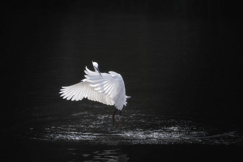 цапля, танец, птицы, животные, birds, animals, wildlife, heron, Одинокий танцорphoto preview