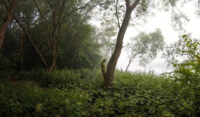 лето, рассвет, туман, Деревья в туманеphoto preview