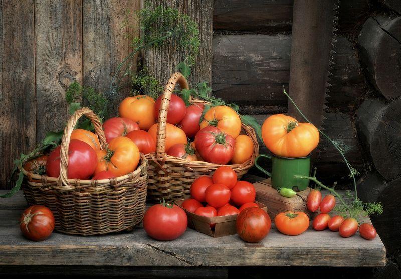 сергей алексеев, натюрморт Томаты, помидоры.........photo preview