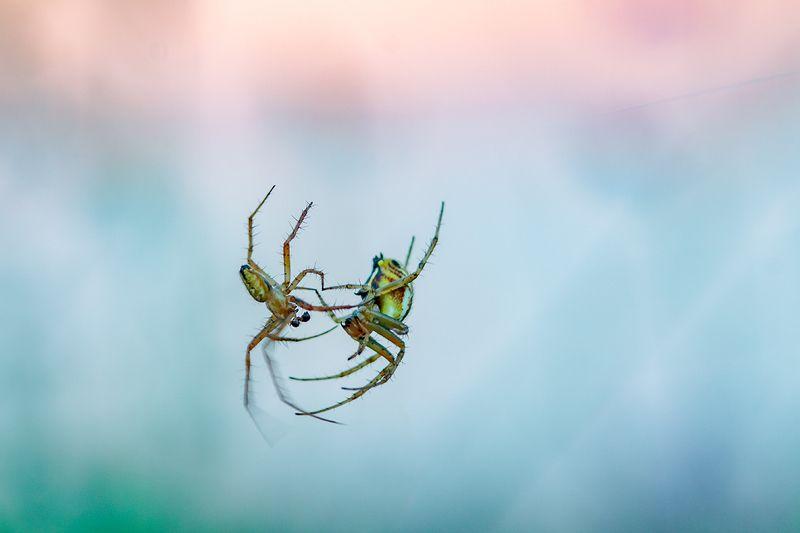 макро, паук Танец в невесомостиphoto preview