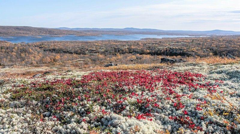 Пейзаж, Корльский полуостров, тундра, осень Ковёр Кольской тундрыphoto preview