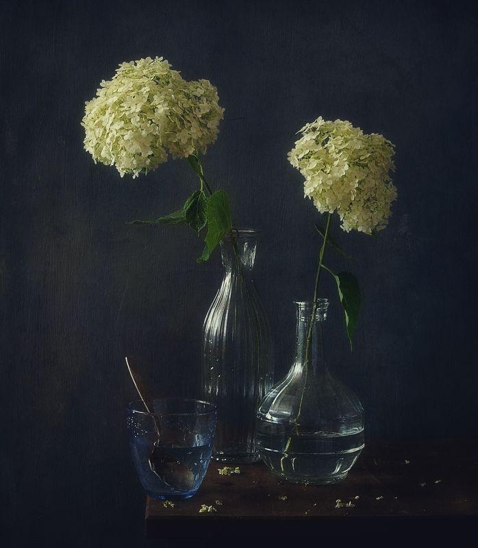 натюрморт,цветы,гортензия,стекло гортензия... фото превью