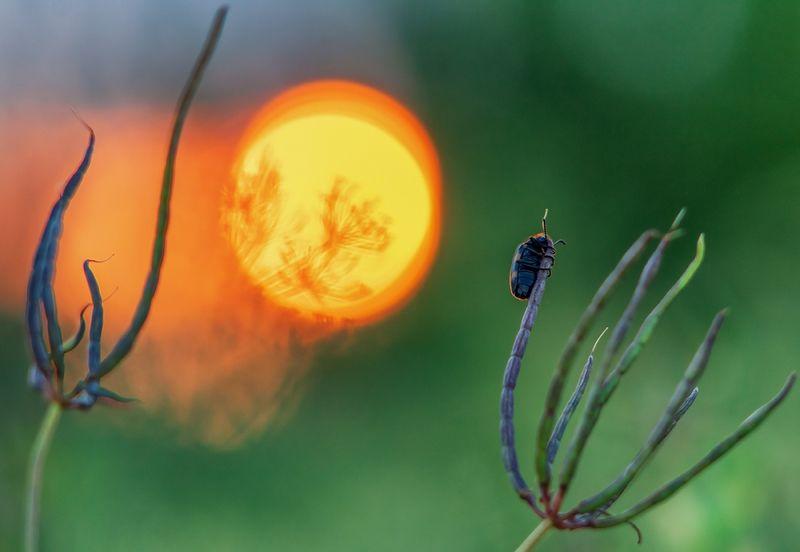 макро, лето, закат ***photo preview