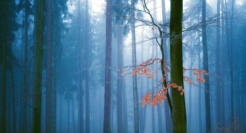 landscape,autumn,canon,mountains A Secret Place...photo preview