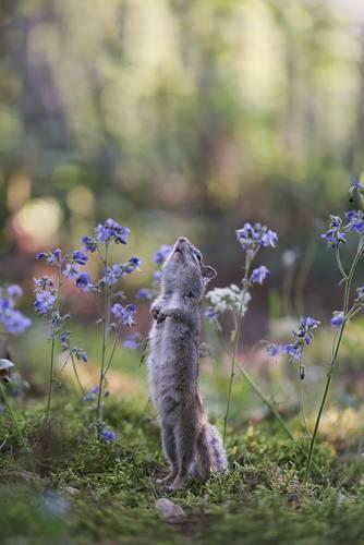 Надо дождик мне позвать, чтоб цветочки поливать!
