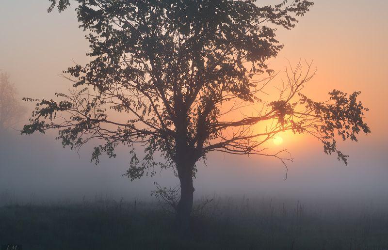 пейзаж, утро, рассвет, туман, луг, весна, травы, дерево, солнце, свет, dawn, sunrise, meadow, may, spring, landscape, countryside, grass, tree, fog, misty, sun, light, foggy, weather \