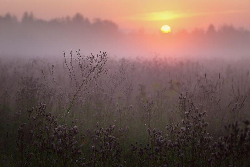 туман, лето, утро Летний рассветphoto preview