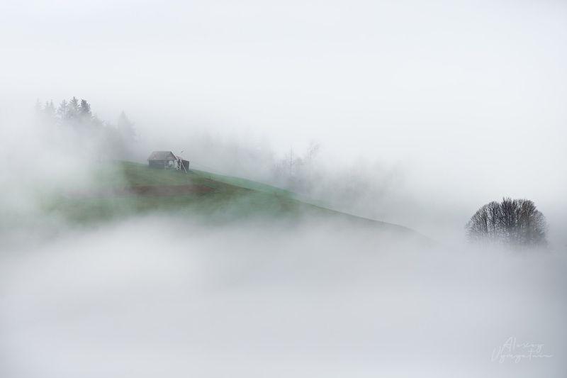 slovenia, fog, house, green, autumn, morning, outdoor В молочных рекахphoto preview