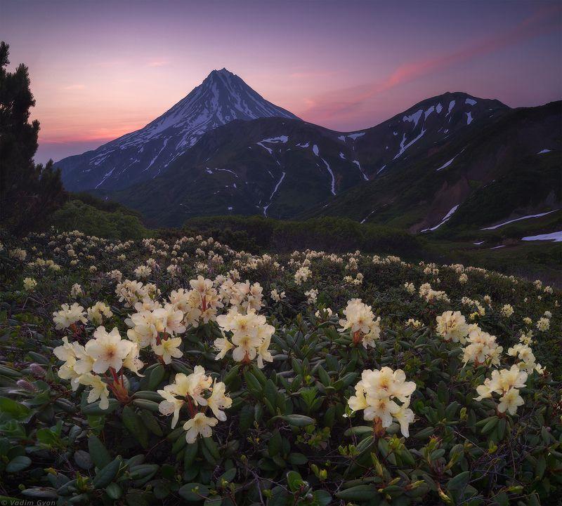 камчатка, kamchatka, вилючинский, рододендроны Рассвет на перевале Вилючинскийphoto preview