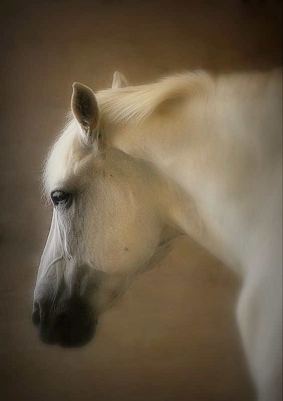 сергей алексеев, лошади, богдарня, петушки Князь тишиныphoto preview