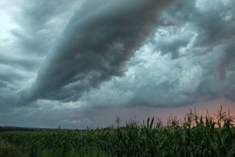 Облачность кукурузного поляphoto preview