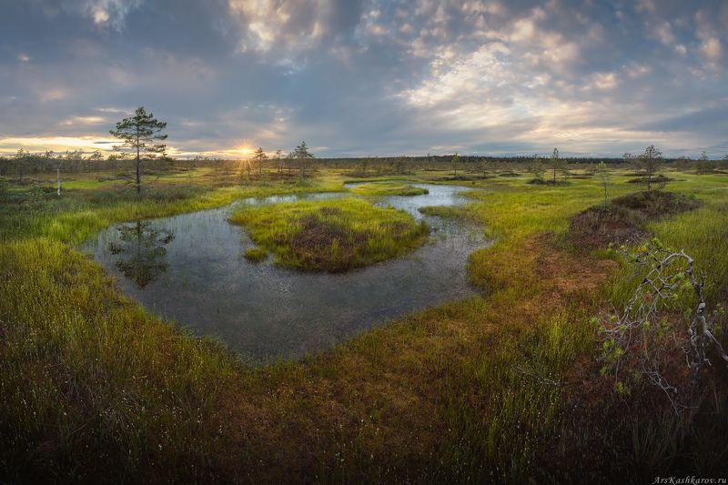 болото, ленобласть, фототур, ленинградская область, болотные топи, лето, сосны \