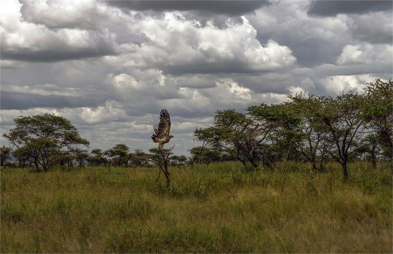 серенгети,танзания photo preview