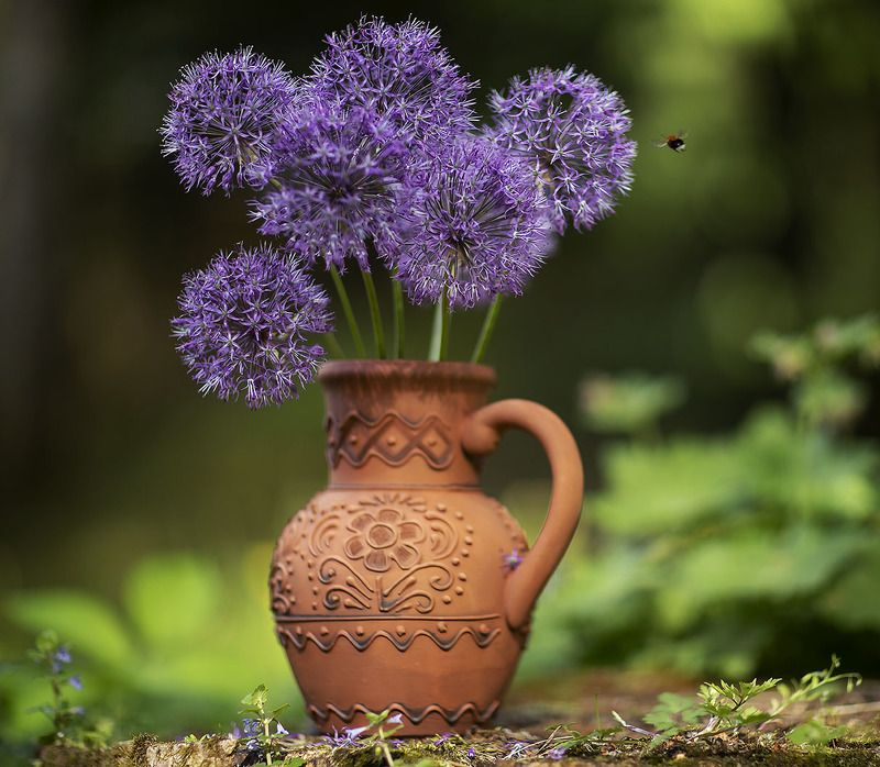 цветы, шары, букет, красота, flower, beautiful, bouquet, nature Сиреневые шарыphoto preview