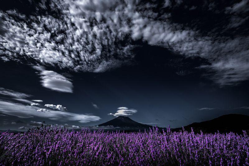 Fuji,Japan,mountain,flower,clouds,lavender,purple Impressive lavender aromaphoto preview