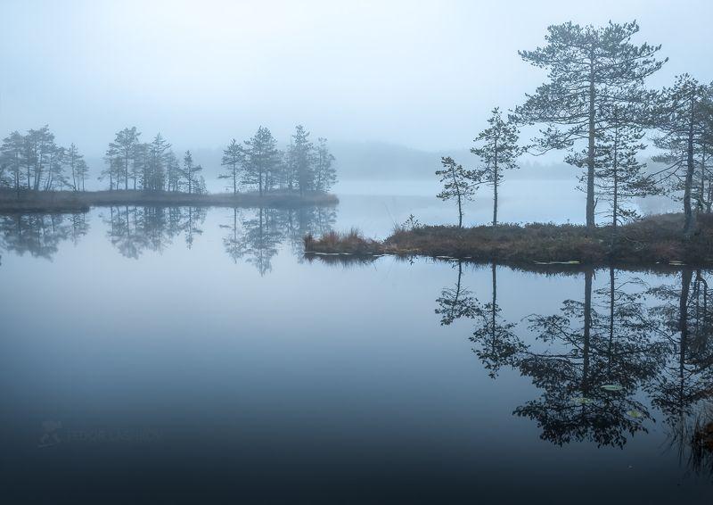 Ленинградская область, рассвет, осень, пасмурно, сосна, озеро, туман, отражение, деревья, берег, серый, стальной,  Туманный покойphoto preview