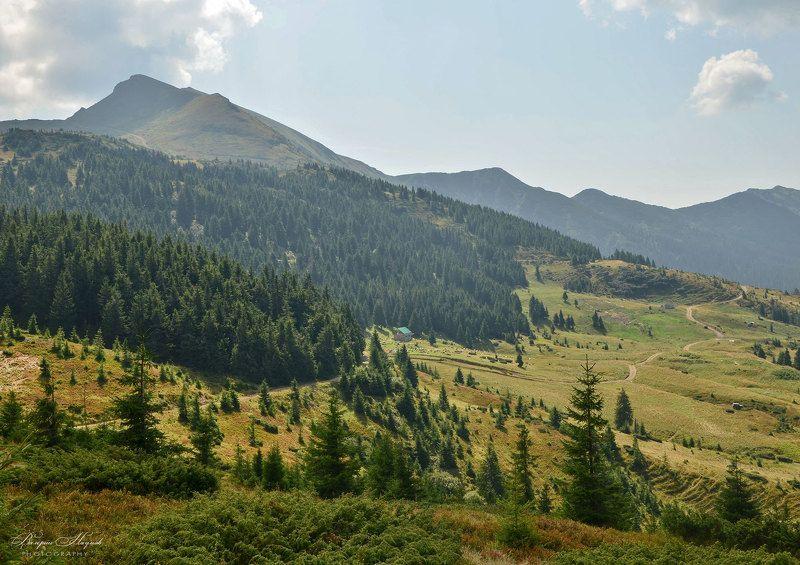 карпаты, мармаросы, гуцульские альпы, лето, полонина лысыча Мармаросыphoto preview