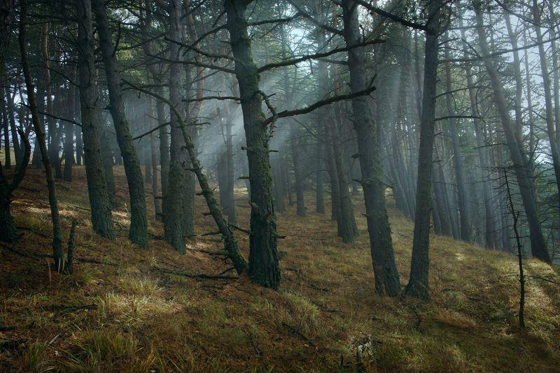 Кабардино-Балкария, Чегемское ущелье, горы, осень, Тихтенген В Чегемском лесуphoto preview