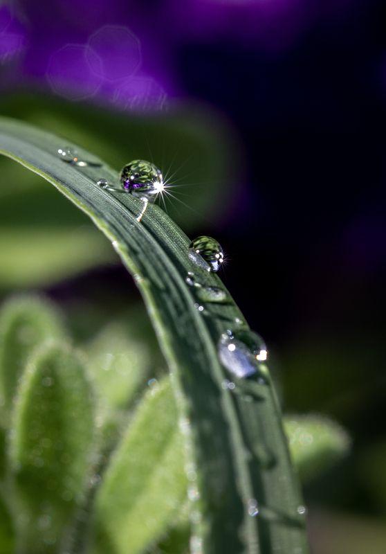 macro, Droplets, drops, drop, waterdrop Dropletsphoto preview