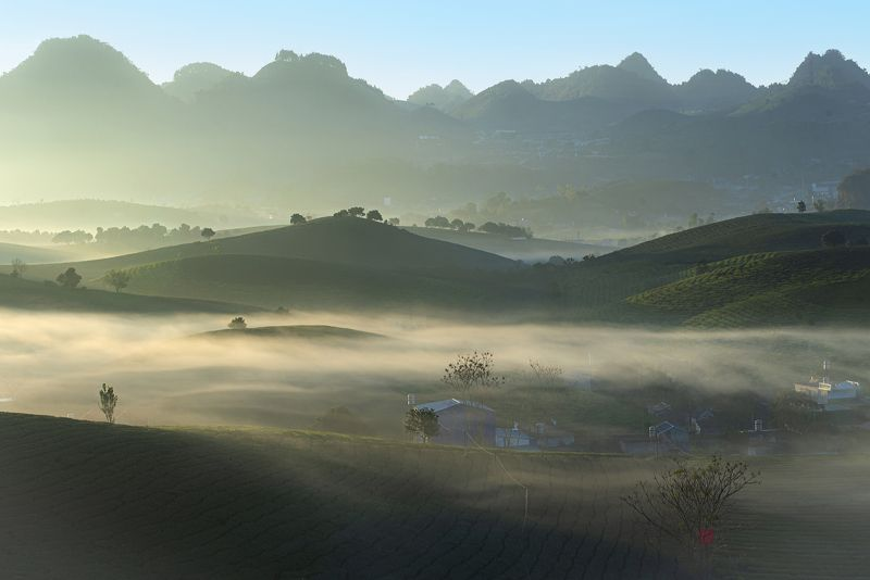 Moc Chau tea\'s hill in the morningphoto preview