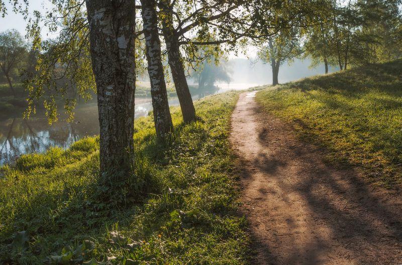 павловск, мариенталь, мариентальскийпарк, пейзаж, бип Летним утром. . .photo preview