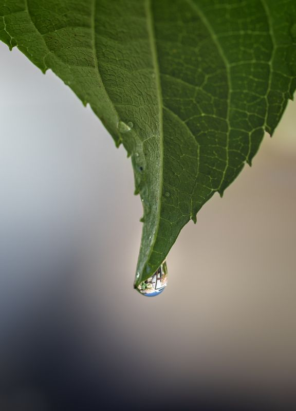 macro, droplet, waterdrop, waterdrops, Droplets Dropletsphoto preview