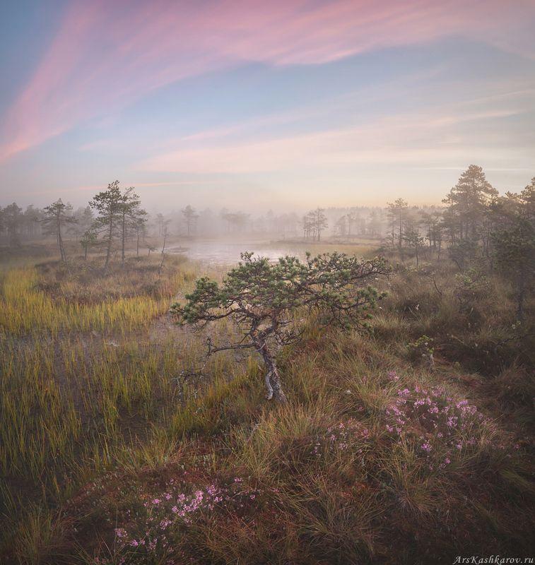 болото, ленобласть, фототур, туман, ленинградская область, болотные топи, вереск, август \