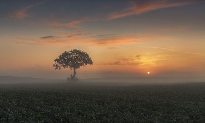 tree, filed, sky, spring, poland, lonley, green, sunrise, oak, mist Oakphoto preview