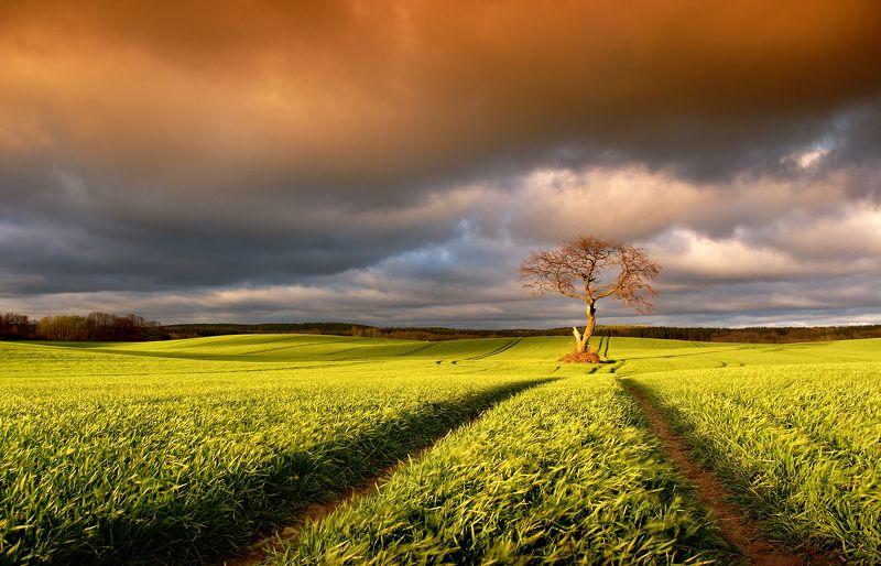 tree, filed, sky, spring, poland, lonley, green, oak, Autumnphoto preview