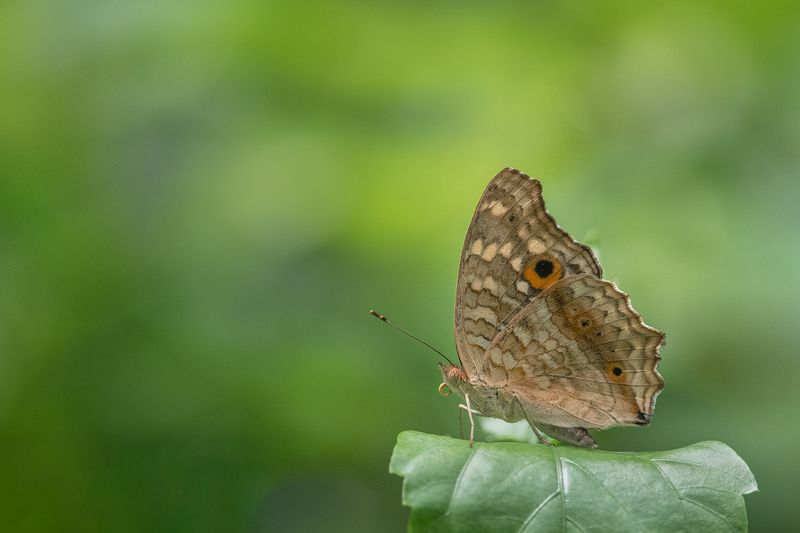 #butterfly #nature photo preview