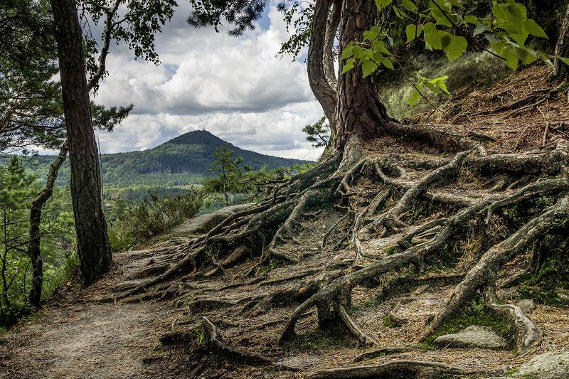 В лесу.photo preview